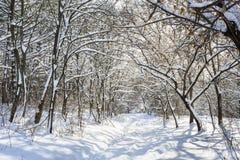 Snöig vinterskog Arkivfoton