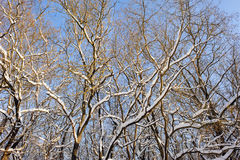 Snöig vinterskog Royaltyfri Fotografi