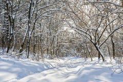 Snöig vinterskog Royaltyfria Bilder