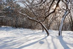 Snöig vinterskog Arkivbilder