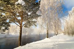 Snöig vinterskog med buskar och björkträd på bankerna av floden med dimma, Ryssland, Uralsna, Januari arkivfoto