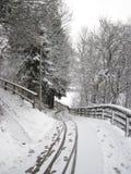 Snöig vinterskog och räfflade breda slingor julskogen knurled morgon som snöig trails övervintrar wide arkivbilder