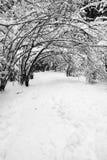 Snöig vinterskogväg Royaltyfri Foto