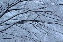 Snöig vinterträdlandskap under tungt snöfall arkivfoto