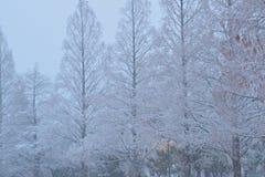 Snöig vinterträdlandskap under tungt snöfall arkivfoton