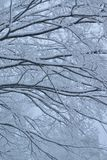 Snöig vinterträdlandskap under tungt snöfall arkivbilder