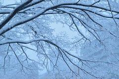 Snöig vinterträdlandskap under tungt snöfall royaltyfri foto