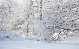 Snöig vinterväderplats, snö täckt trädlandskap Snowfall i skogen royaltyfri bild