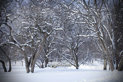 Snöig vintrig dag i skog med bron Royaltyfri Bild