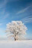 Snöig winterday Royaltyfri Foto