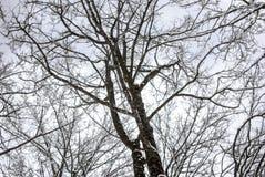 Snölandskap i vinter Arkivbild