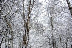 Snölandskap i vinter Royaltyfria Foton