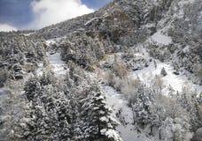 Snölandskap i vinter Arkivfoto