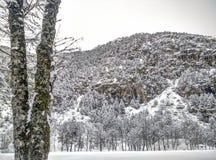Snölandskap i vinter Arkivfoton