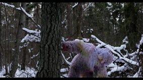Snömansagatecken i längd i fot räknat ultra HD för vinterskog utomhus- för fantasi stock video