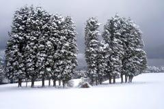 Snön med träd Fotografering för Bildbyråer