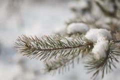 Snön på filialerna av ett träd arkivfoton