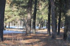 Snön smälter, skogen, våren, snö royaltyfria bilder