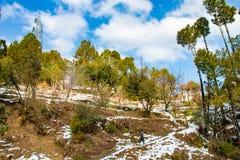 Snönedgång i lantgårdfält av kulleområde med träd över vita moln och blå himmel royaltyfri foto