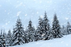 Snönedgång i vinterskog royaltyfria bilder