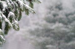 Snönedgång på granträd Arkivbild