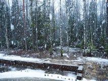 Snönedgångar i skogen med träd Intensiv snö täcker ögonblickligen yttersidan av skog- och trädfilialerna med ett lager av sno arkivbilder