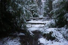Snönedgångar i skogen med träd Intensiv snö täcker ögonblickligen yttersidan av skog- och trädfilialerna med ett lager av sno arkivfoton