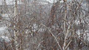 Snönedgångar på bakgrund av björkträdet stock video
