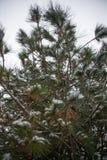 Snöräkningar sörjer trädet Royaltyfri Fotografi