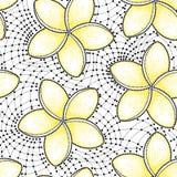 Snör åt den sömlösa modellen för vektorn med den prickiga blomman av Plumeria eller frangipanien i guling och på den vita bakgrun Fotografering för Bildbyråer