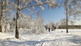 Snöskog i klart väder Längdlöpningskidåkare lager videofilmer