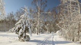 Snöskog i klart väder Längdlöpningskidåkare arkivfilmer