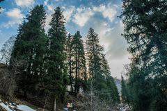 Snöskog med blå himmel royaltyfria bilder