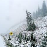 Snöstorm Royaltyfri Foto