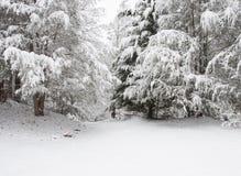Snöstorm i den Chattahoochee nationalskogen royaltyfria bilder