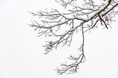 Snöstorm i den Chattahoochee nationalskogen royaltyfria foton