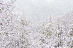Snöstorm i den Chattahoochee nationalskogen arkivbild