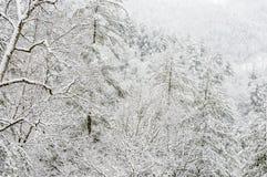 Snöstorm i den Chattahoochee nationalskogen fotografering för bildbyråer