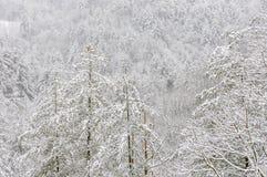 Snöstorm i den Chattahoochee nationalskogen arkivfoton