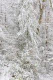 Snöstorm i den Chattahoochee nationalskogen royaltyfri foto