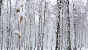 Snöstorm i den täta skogen lager videofilmer