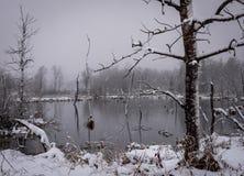 Snöstorm i våtmarkdammet, snö som blåser över kameraträd i dammet royaltyfri bild