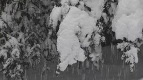 Snöstormen blåser snö på buskar och träd i den Washington vintern stock video