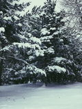 Snöträd Royaltyfri Foto