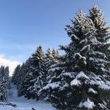 Snöträdhimmel Arkivfoto