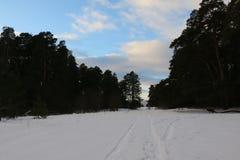 Snöväg i vinterskog Arkivfoton