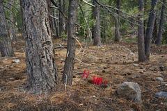 Snöväxt, Lassen vulkanisk nationalpark Fotografering för Bildbyråer
