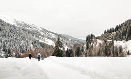 Snövandring i - mellan berg och alpina träd royaltyfria bilder