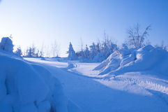 Snövesslaslinga i snön Fotografering för Bildbyråer