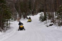 Snövesslor som rider på skog, skuggar i adirondacksen Royaltyfri Bild